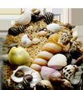 Sand/shell$3.99